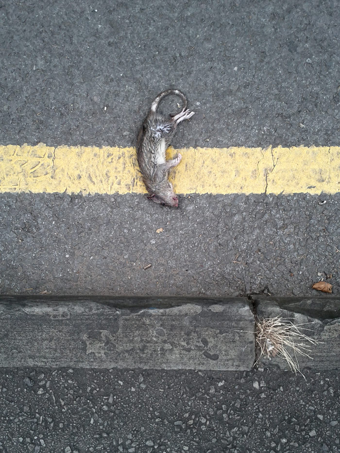 Dead Rat, Bristol by Lee Broughall